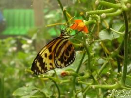 Butterfly 2