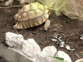 Turtoise 1